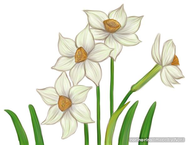 水仙の花です