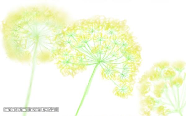 フェンネルの花