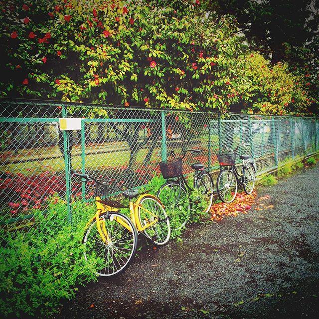 椿の赤と自転車の黄色が心ひかれました。数日前の雨の日の一コマ